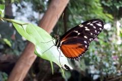 Colibri im Papiliorama - 20 Jahre Colibri